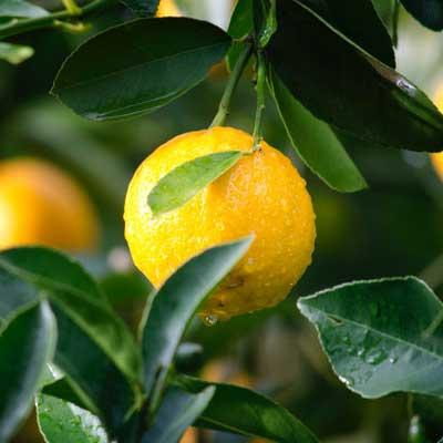 horticulture-fruit-produce.jpg