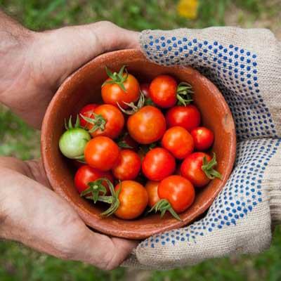 horticulture-vegetable-produce.jpg