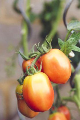 farming04-free-img.jpg